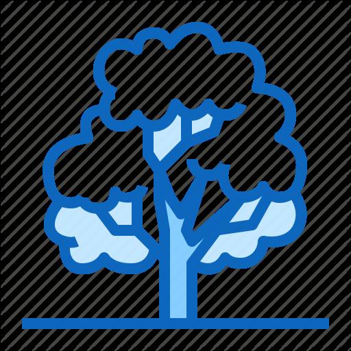 144_tree-deciduous-plant-forest-oak-512